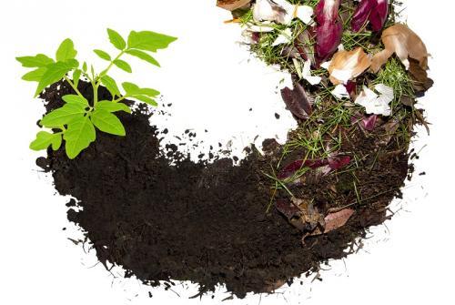 Slika prikazuje razkroj odpadkov kompost.